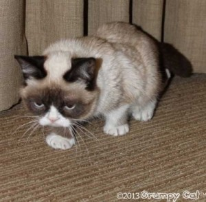 Grumpy Cat hates Multi-part posts about Under-cabinet Lighting